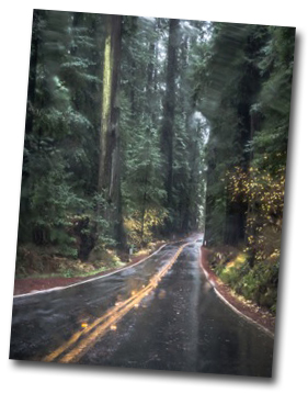 RedwoodHighway-jpg